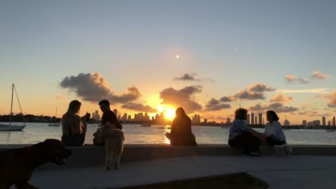 vídeos y material grabado en eventos de stock de people enjoying sunset and dog walking passing by at miami waterfront - miami