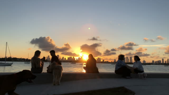 vídeos de stock e filmes b-roll de people enjoying sunset and dog walking passing by at miami waterfront - miami
