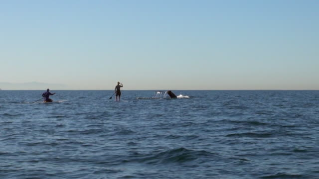 people entertained by diving whale in the ocean - whale watching stock videos and b-roll footage