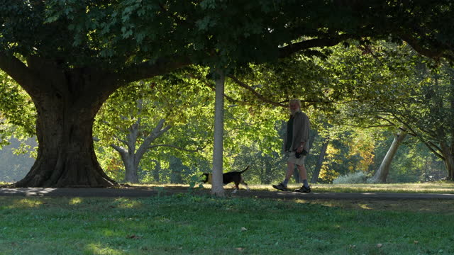 people excising and walking dog at the park in louisville amid the 2020 global coronavirus pandemic. - active seniors stock videos & royalty-free footage
