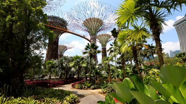 people explore the supertree grove at gardens by the bay on february 22, 2013 in singapore. the 250 acre nature park located next to marina bay... - grove stock videos & royalty-free footage