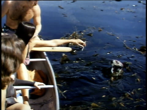 1975 ms people feeding a sea otter / morro bay, california, united states - 1975 stock videos and b-roll footage