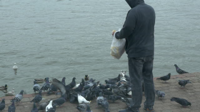 people feeding birds by the hudson river in new jersey. - större duva bildbanksvideor och videomaterial från bakom kulisserna