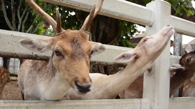 vídeos de stock e filmes b-roll de people feeding deers - jardim zoológico
