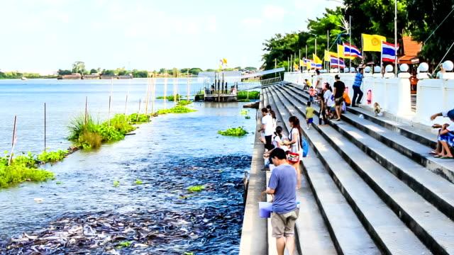 人々 の寺院地域で魚を給餌 - ヒート点の映像素材/bロール
