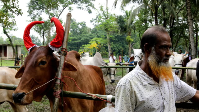 vidéos et rushes de people gather at a cattle market ahead of eid al-adha in a rural area in bangladesh on july 29, 2020. - fête religieuse