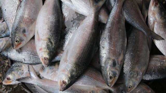 people gathered at fish market during coronavirus epidemic. - fish market stock videos & royalty-free footage