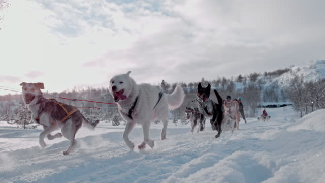 slo mo people having fun dog sledding in norway - husky stock videos & royalty-free footage