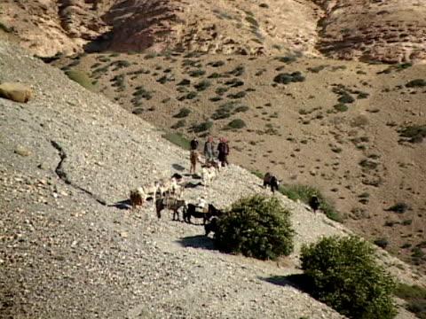 vidéos et rushes de zo, ws, people herding cattle in himalaya mountains, mustang-himalaya, nepal - groupe moyen d'animaux