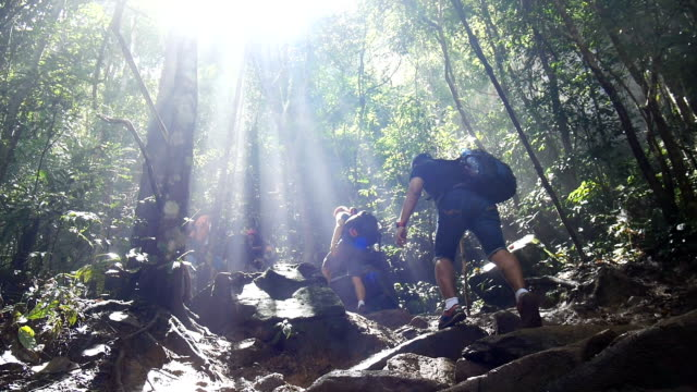 People hiking in tropical jungle forest