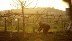 People hoeing the soil, hands planting green seedling, community gardening, urban gardening, urban agriculture, allotments, urban farming, sustainable garden, drip irrigation