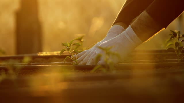 vídeos de stock e filmes b-roll de people hoeing the soil, hands planting green seedling, community gardening, urban gardening, urban agriculture, allotments, urban farming, sustainable garden, drip irrigation - glove