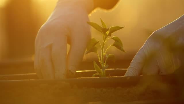 vídeos y material grabado en eventos de stock de personas que salpican el suelo, manos plantando plántulas verdes, jardinería comunitaria, jardinería urbana, agricultura urbana, asignaciones, agricultura urbana, jardín sostenible, riego por goteo - guantes de protección