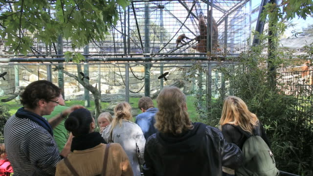 stockvideo's en b-roll-footage met people in front of orangutan, berlin zoo - dierentuin