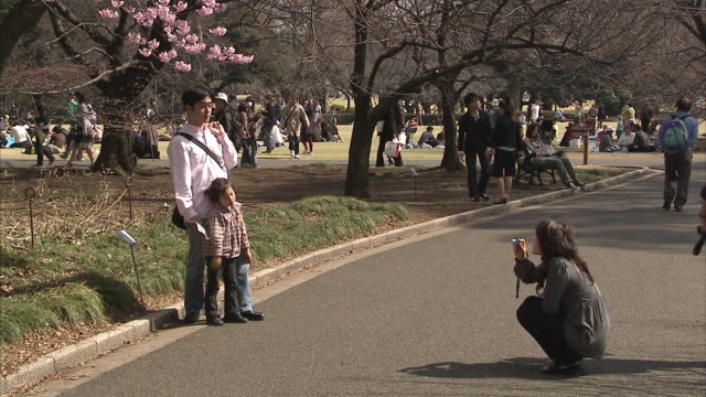 ws tu people in park and cherry blossoms, tokyo, japan - 写真を撮る点の映像素材/bロール