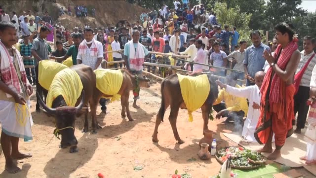 People in Rani a small village near Guwahati in the northeast Indian state Assam perform the traditional ritual of animal sacrifice at a hilltop...