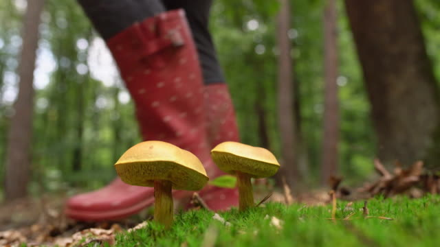 cu people in rubber boots walking past yellow mushrooms growing in forest - low section stock videos & royalty-free footage
