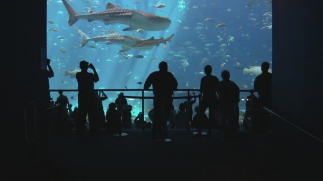 ws tu people looking at fish and whale shark (rhincodon typus) swimming in georgia aquarium / atlanta, georgia, usa - aquarium stock videos & royalty-free footage