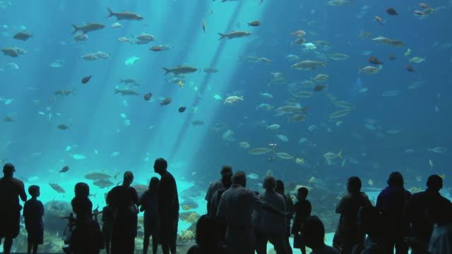 WS People looking at fish swimming in Georgia Aquarium / Atlanta, Georgia, USA