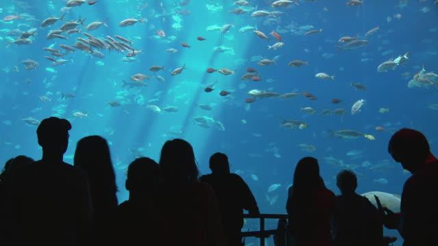 ms people looking at fish swimming in georgia aquarium / atlanta, georgia, usa - aquarium stock videos & royalty-free footage