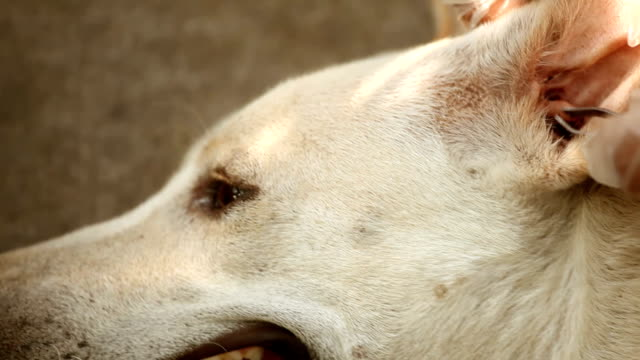 people looking fleas in dog - flea insect stock videos and b-roll footage