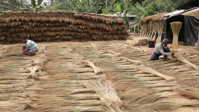 People makes broom by hills grass Tobacco cultivation in Bandarban hill district of Bangladesh raises hackles as some companies are managing to...