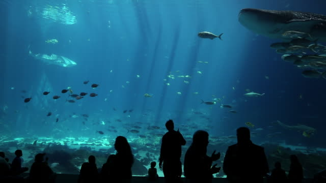 ms people moving in front of large fish tank in aquarium / atlanta, georgia, united states - 水族館点の映像素材/bロール