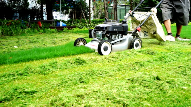 people mowing grass in park