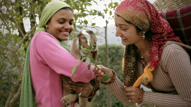people of himachal pradesh: beautiful young women with goat kid - livestock stock videos and b-roll footage