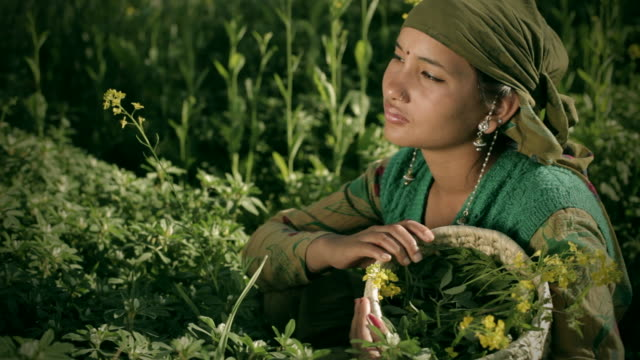 people of himachal pradesh: young rural woman in green farm - headscarf stock videos & royalty-free footage