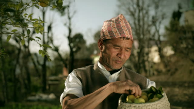 People of Nepal: Happy farmer collecting fresh lemon