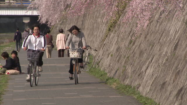 WS People on footpath along riverbank and cherry blossoms, Kyoto, Japan