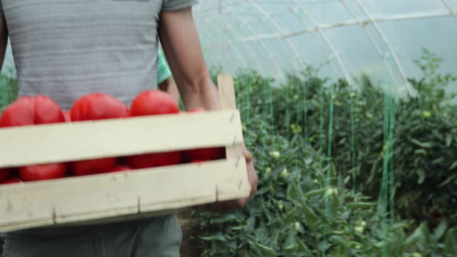 people on vegetable farm - crate stock videos & royalty-free footage