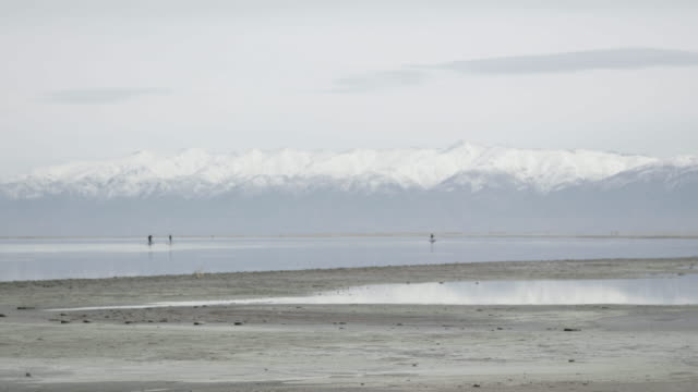 People paddleboard in Great Salt Lake, wide shot