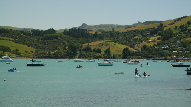 people paddleboarding and on pedalos in akaroa harbour - akaroa stock videos & royalty-free footage