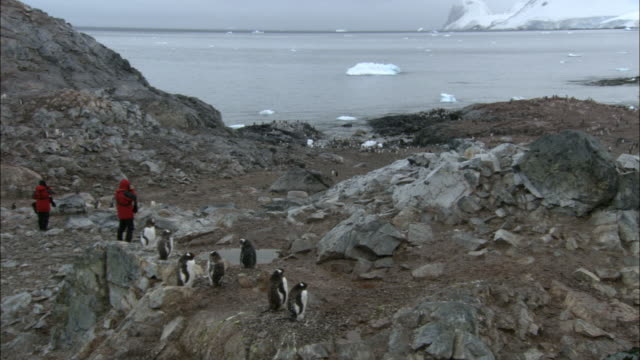 ws, tu, people photographing gentoo penguins (pygoscelis papua) at seashore, snow capped rocky mountain in background, cuverville island, antarctica - antarctic ocean stock videos & royalty-free footage