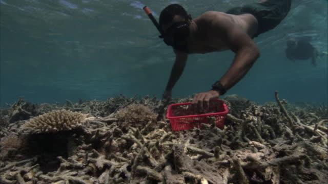 people plant coral (scleractinia) transplants onto damaged reef, fiji - 植える点の映像素材/bロール