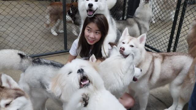 People play and take photos with huskies at the TrueLove @ Neverland Cafe in bangkok