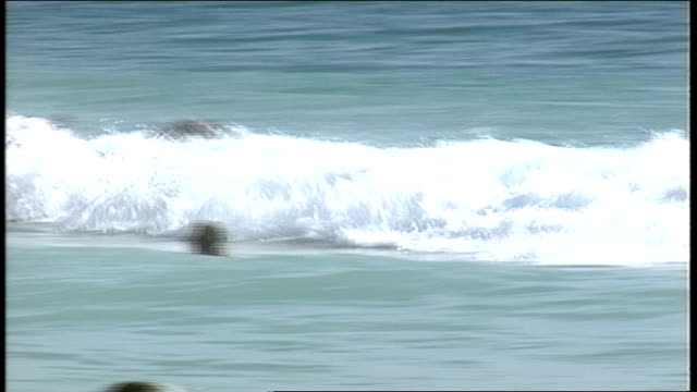 people playing in waves in perth australia - water sports equipment stock videos and b-roll footage