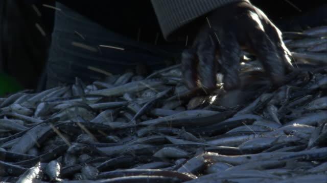 vídeos de stock, filmes e b-roll de people prepare fish for sale by lake malawi, cape maclear, malawi - indústria da pesca