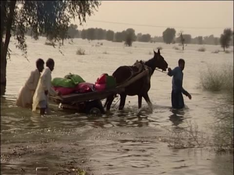 people pushing cart and horse through high flood water - pferdeartige stock-videos und b-roll-filmmaterial