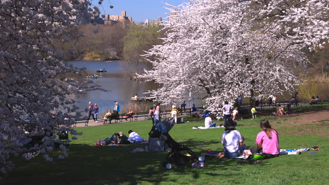 people relax and enjoy time on the lawn beside the lake in central park at new york city, usa on april 08, 2021. visitor numbers at the park seem to... - baby girls stock videos & royalty-free footage