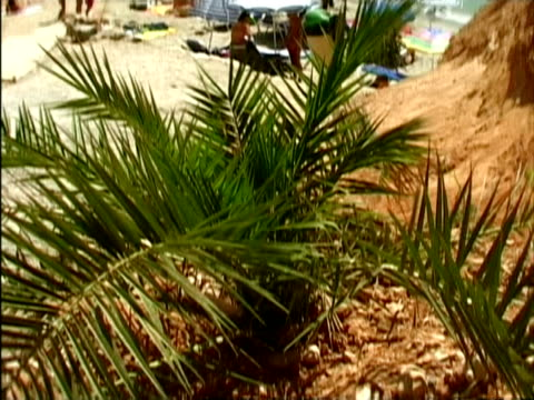 stockvideo's en b-roll-footage met ms, tu, people relaxing on beach, ibiza, spain - waaierpalm