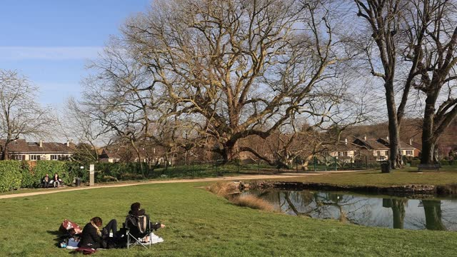 """people rest on a lawn next to a plane tree named """"arbre de diane"""" which is classified as """"arbre remarquable de france"""" on march 23 in les clayes sous... - durability stock videos & royalty-free footage"""