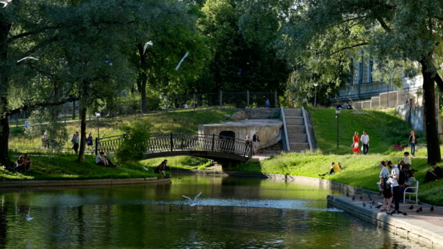people resting and feeding seagulls at the pond of yusupov garden in saint-petersburg, russia - sankt petersburg stock-videos und b-roll-filmmaterial