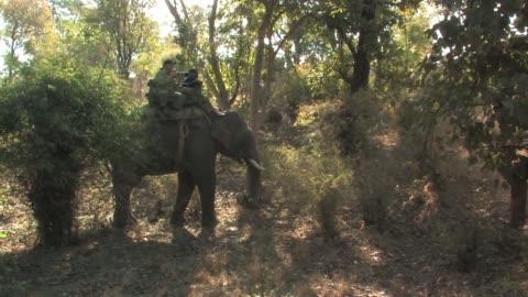 people riding an indian elephantthrough the forest. editorial use only. - tamdjur bildbanksvideor och videomaterial från bakom kulisserna