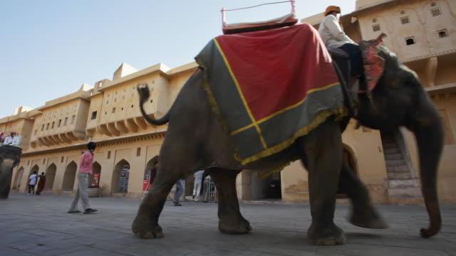 ms people riding elephants at amber fort / jaipur, rajasthan state, india - 史跡めぐり点の映像素材/bロール