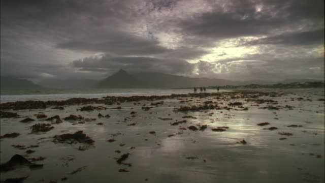 people riding horses along kelp covered beach under dark grey sky, muizenberg, south africa available in hd. - kelp stock-videos und b-roll-filmmaterial