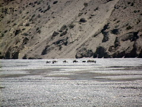 ws, zo, people riding horses along river in himalaya mountains, mustang-himalaya, nepal - medium group of animals stock videos & royalty-free footage