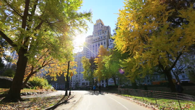 vidéos et rushes de people run the path which is surrounded by illuminated autumnal trees and structures by morning sun at central park. - square